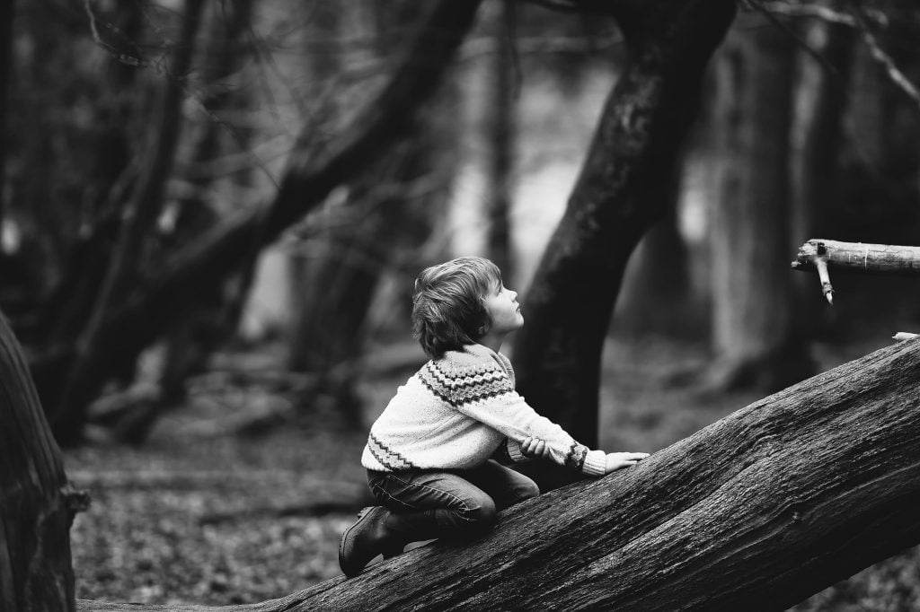 boy 1841029 1920 1024x682 - Drzewo ichłopiec