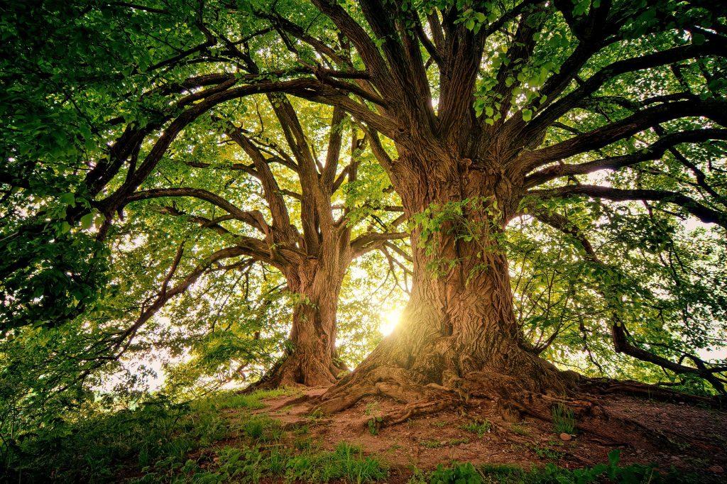 tree 3822149 1920 1024x682 - Wykorzystaj energię drzew