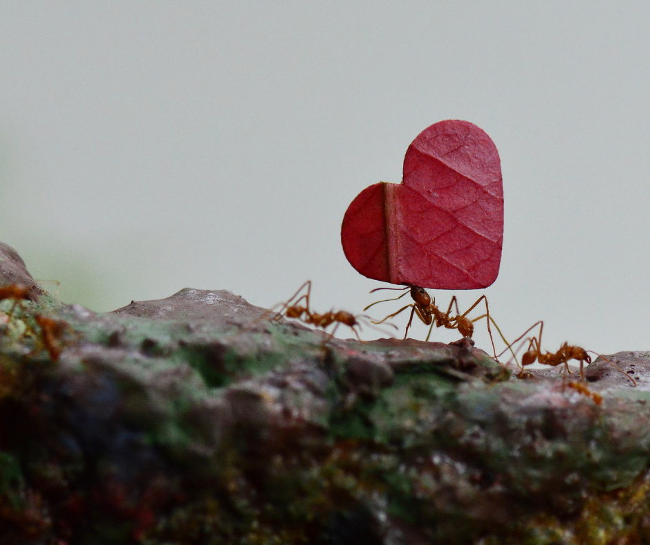 Projekt beztytulu6 - Mrówka ipszczółka